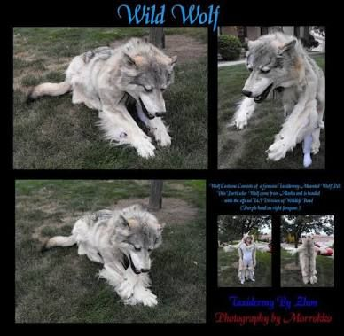 Image result for How to make a wolf costume. saw this done at Nan Desu Kan in Denver. awesome in person!