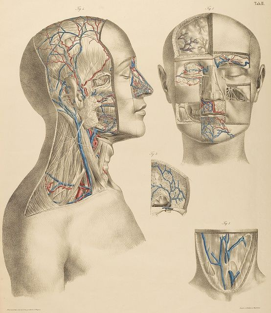 Surgical-Anatomical Tables by Anton Nuhn, 1846    From the anatomical literature and drawings collection at Heidelberg University--HeidICON.