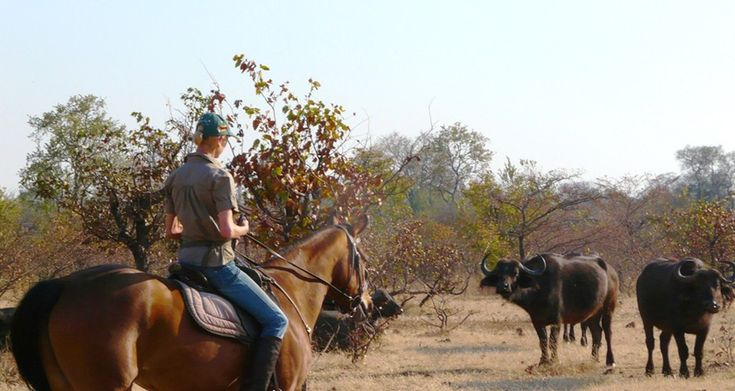 Explore Victoria Falls in a very unique & different way – on a horse back safari adventure. This is perfect for beginners and horse enthusiasts.  Explore the bush, the surrounding highlights and experience the views from the back of a horse.