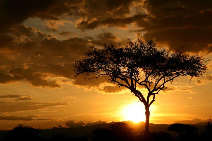 Εθνικό Πάρκο Tarangire, Τανζανία