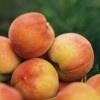 Peach of a Celebration
