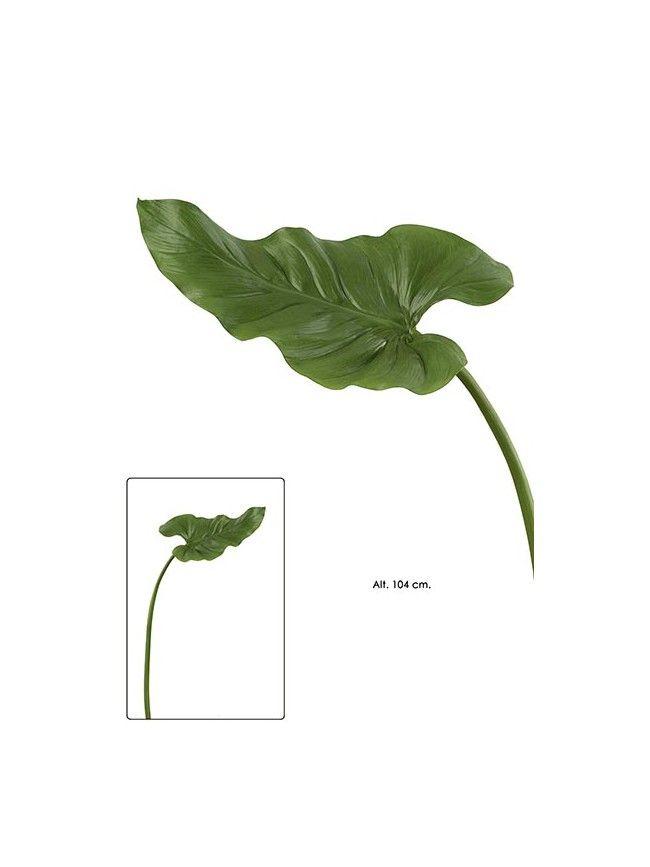 17 mejores im genes sobre hojas en pinterest santa - Plantas de hojas verdes ...