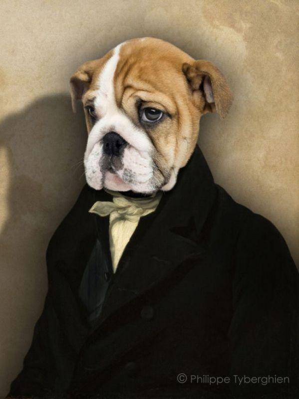 PHOTO portrait animalier habit costume chien - Tristan