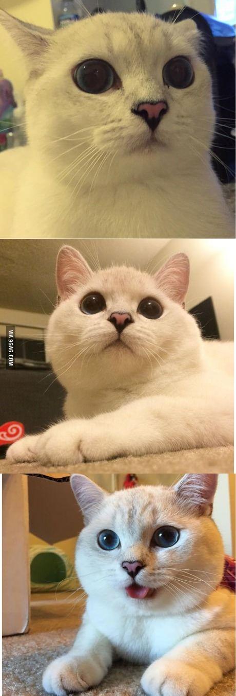 The cat version of doge. Kat