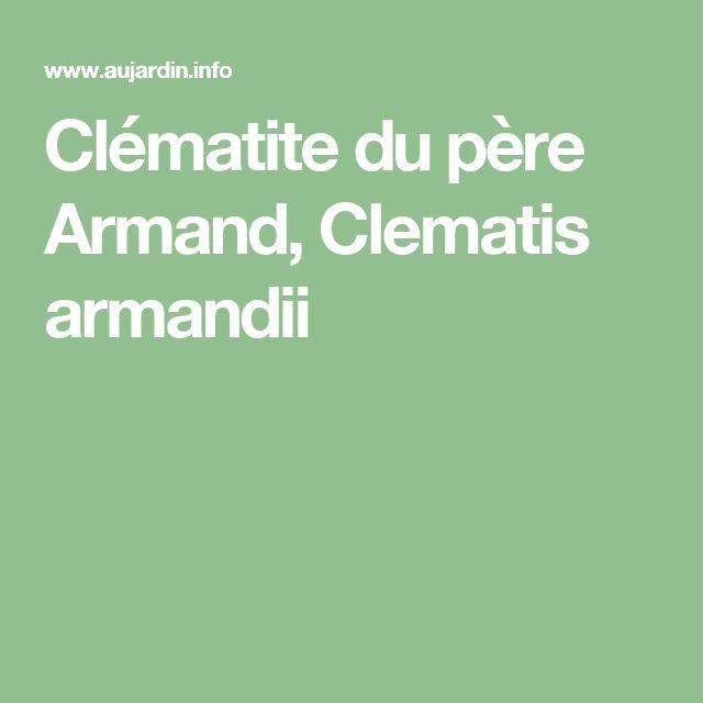 Clématite du père Armand, Clematis armandii