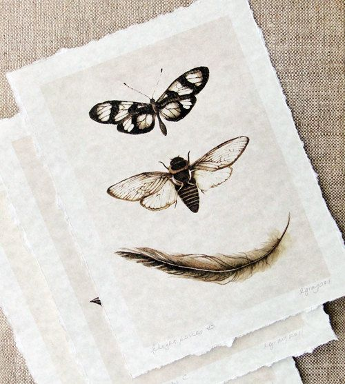 sepia insect print