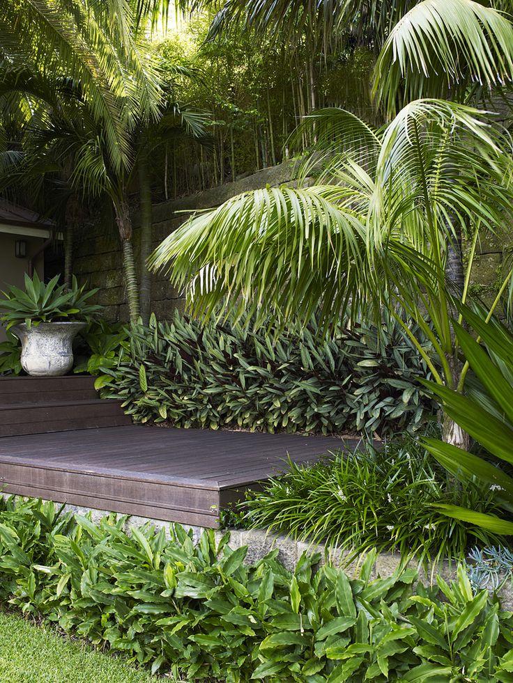 Elletaria cardamomum with Ctenanthe sp. | by William Dangar & Associates