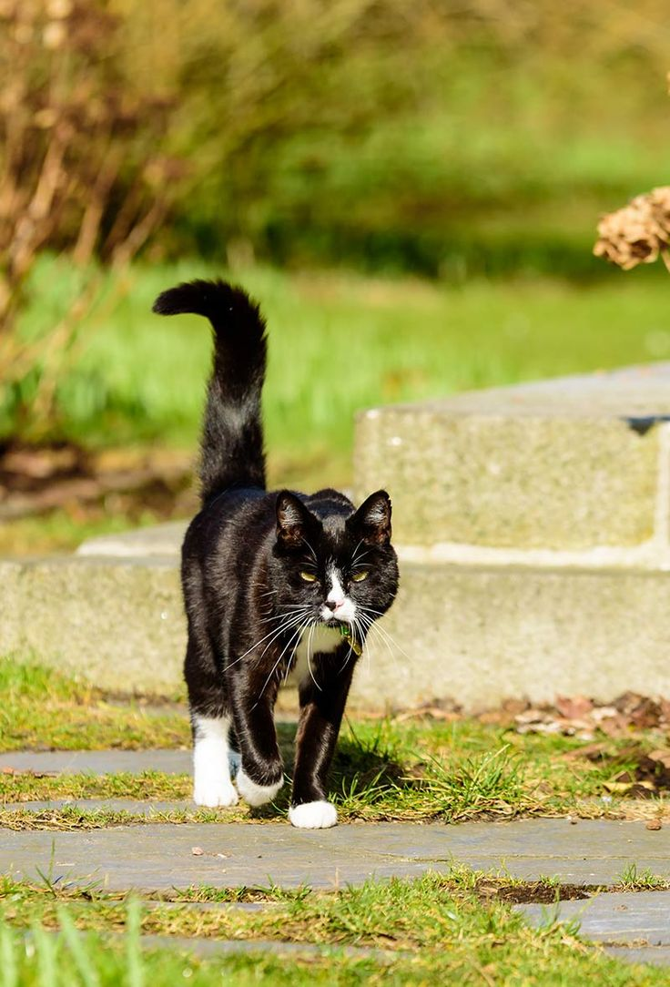 167 best the happy cat site images on pinterest cat site