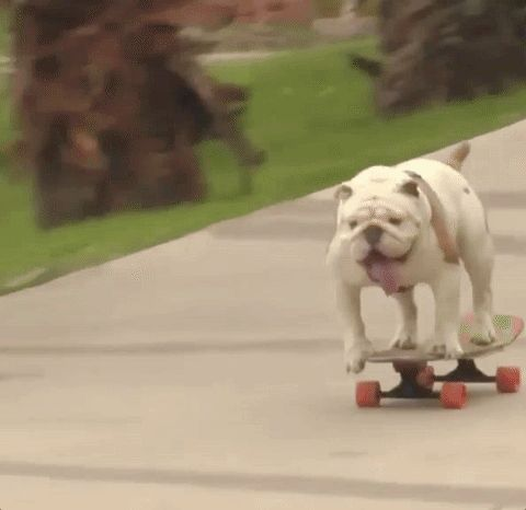 ¿Te lo vas a perder?  #viral #gif #perros #humor