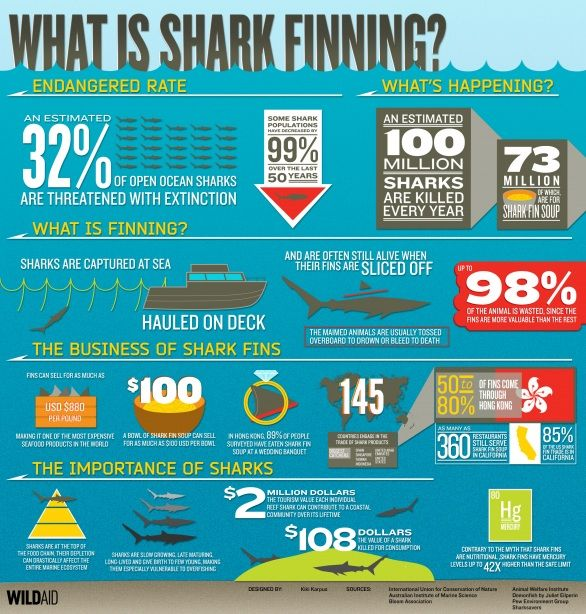 What is shark finning and why should you care? See what we're doing to stop this cruel practice: http://www.humanesociety.org/issues/shark_finning/timelines/shark_fins.html#.UnqnwPmTySo: Sharks Fin, Ocean Infographic, Website, Web Site, Ocean Conservation, Environment Infographic, Sharks Week, Fin Soups, Fin Infographic