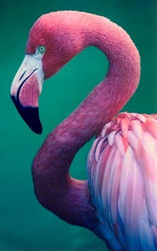 Pink Flamingo - #Luxurydotcom