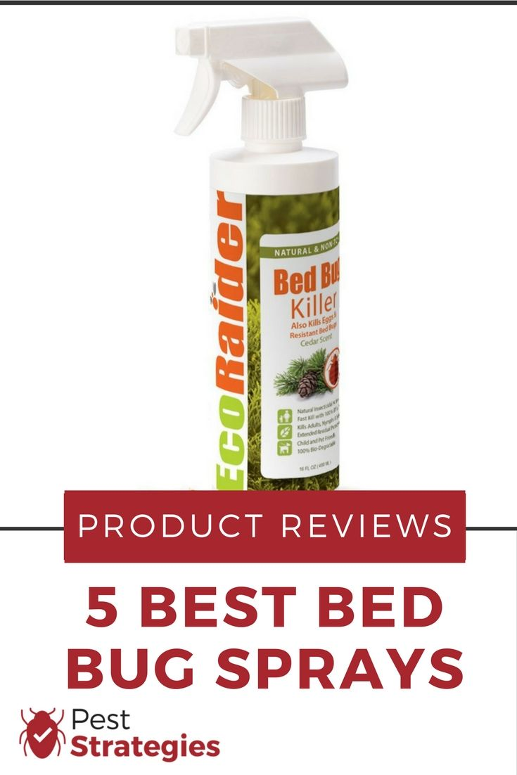 Top 5 Best Bed Bug Sprays 2019 Review With Images Bed