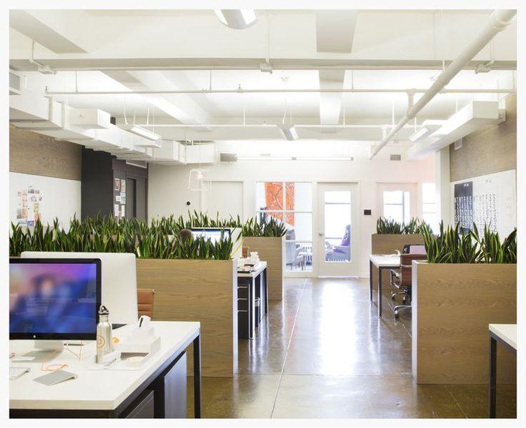 Best 25 office plants ideas on pinterest best office plants best plants for office and desk - Cool office plants ...