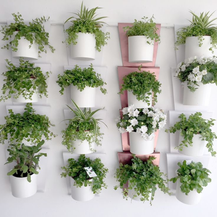 10 best vanzha products images on pinterest container plants herb garden planter and house plants. Black Bedroom Furniture Sets. Home Design Ideas