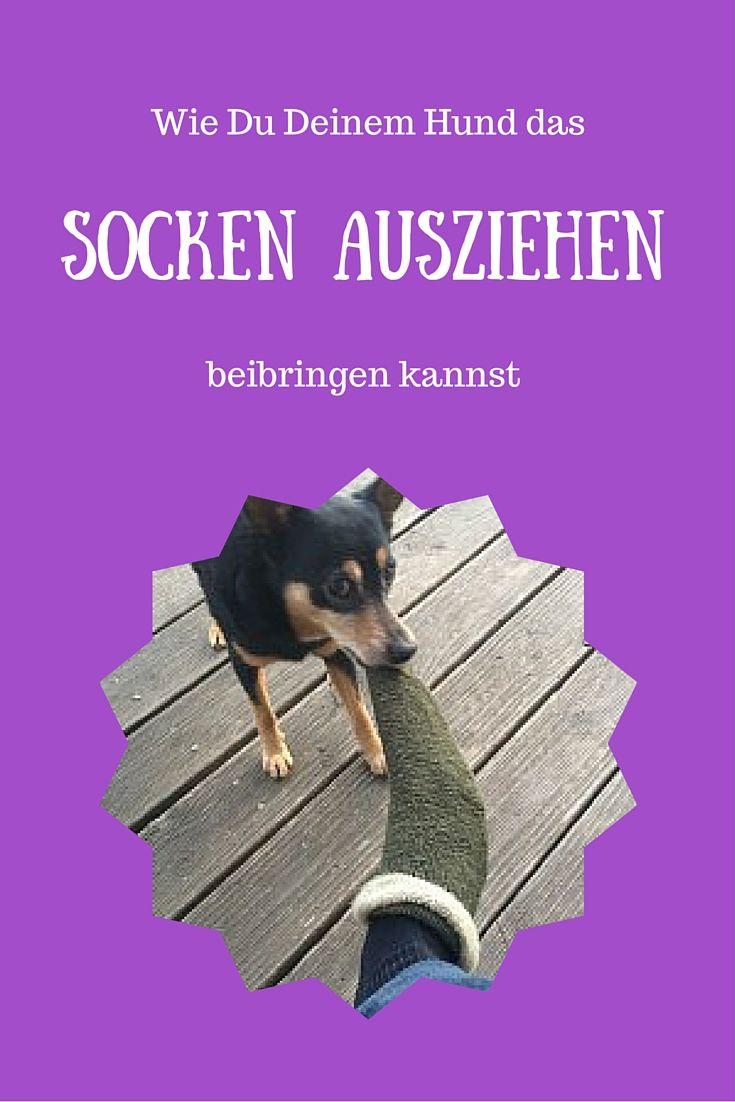 Socken ausziehen macht den meisten Hunden Spaß und beschäftigt ihn bei schlechtem Wetter. Hier zeige ich Dir, wie Du es ihm beibringen kannst.