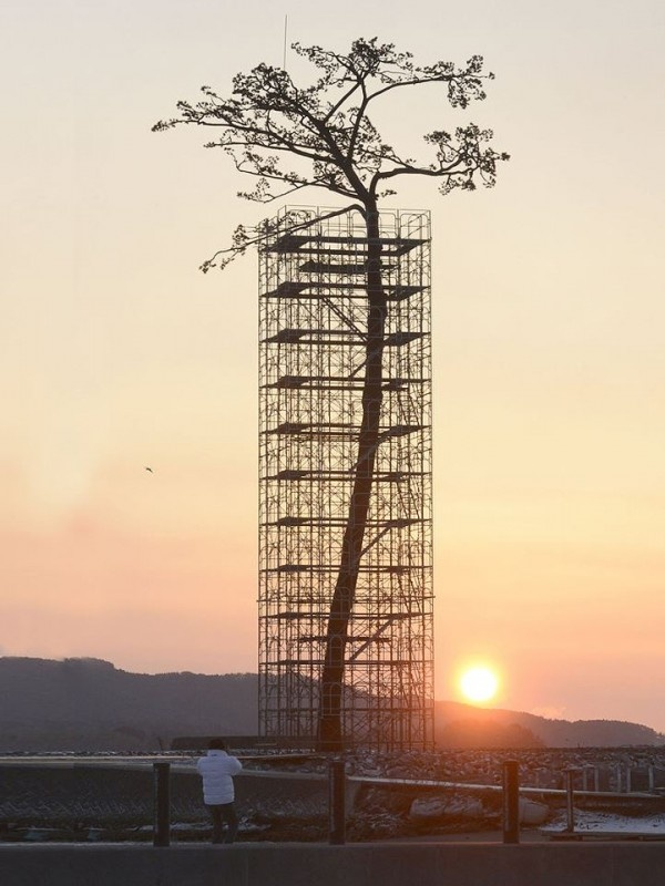 """Monumental Tree Sculpture Commemorates The """"Miracle Pine"""" As A Sign Of Recovery For Japan Two Years After Disaster"""