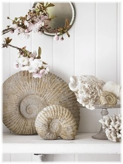 Shells are from the Netherlands. Nice selection of items, just difficult reading web site.