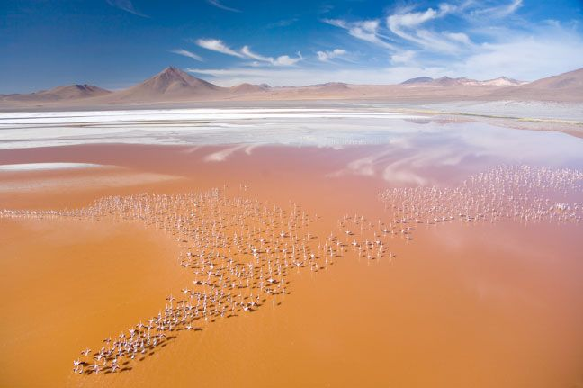 Would love to see this. Laguna Colarada, Bolivia. Flamingos! >> How awesome of a sight!
