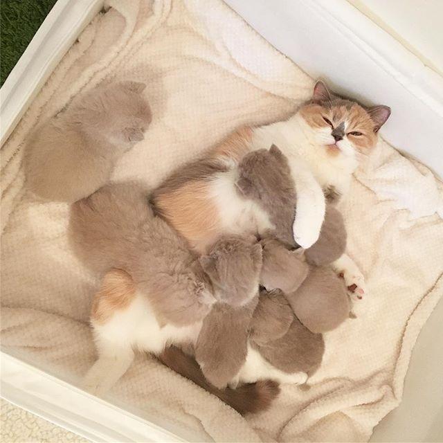 So sweet....little fuzzballs.
