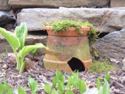 (link) DIY: How to make a Toad Abode. PIC: Like the toad house with the tray on top growing a plant!  ~ for more great PINs w/good links visit me @djohnisee ~ have fun!