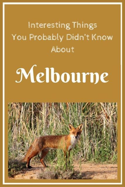 Interesting Things You Probably Didn't Know About #Melbourne #Australia