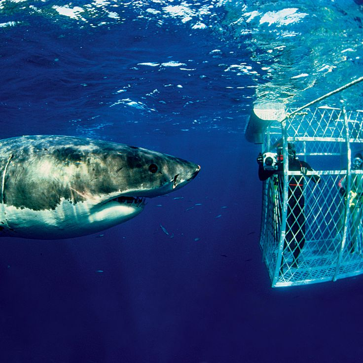 Cage diving with great whites.... hmm maybe?