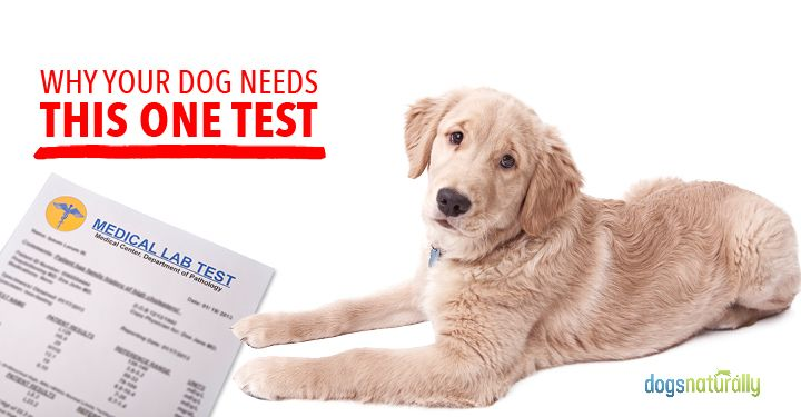 In House Dog Titer Tests