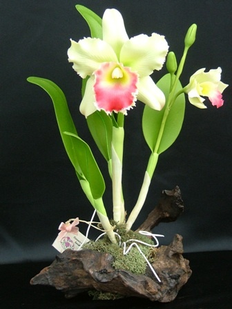 Making Clay Flowers (great orchids) http://mysite.verizon.net/clayorchids/id25.html beautiful orchid!