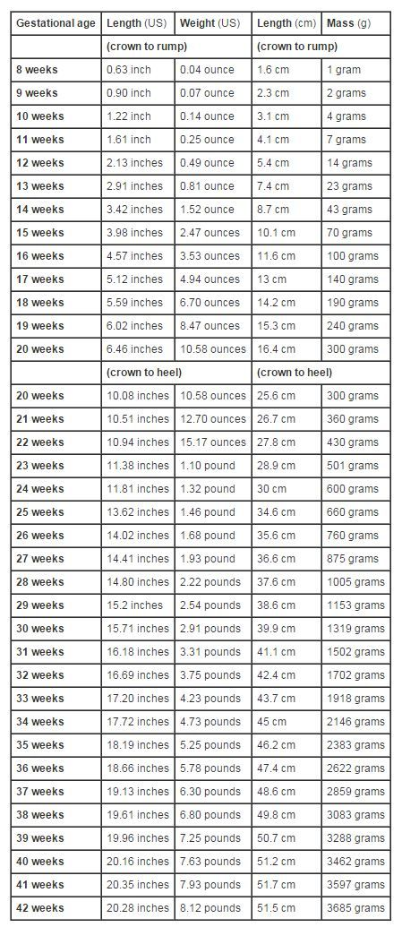 Growth Chart Fetal Length And Weight Week By Week Baby Stuff