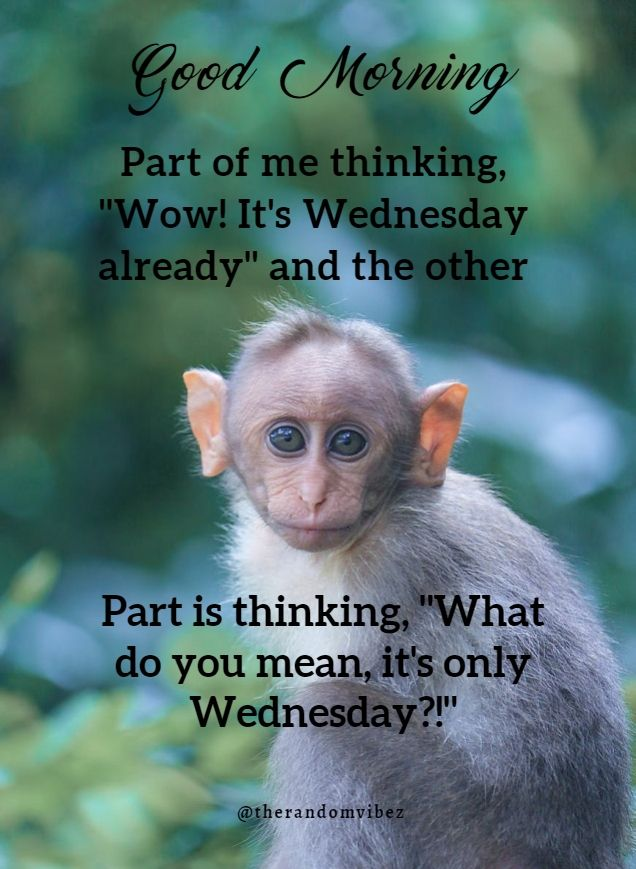 Wednesday Morning Funny : wednesday, morning, funny, Funny, Wednesday, Quotes,, Sayings,, Pics,, Images, Inspirational, Quotes
