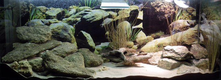 Terrarium d sertique gecko pinterest terrarium reptile terrarium and reptiles - Decor fond terrarium desertique ...