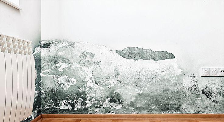Black mold wall