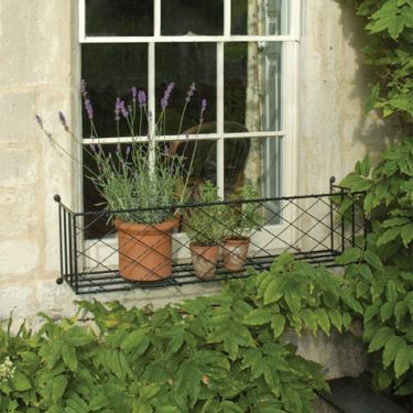 To help diguise the kitchen window...with seasonal planting