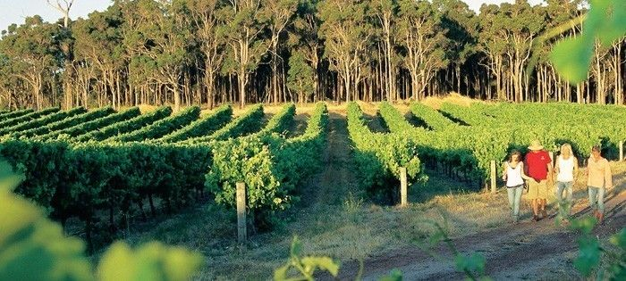 Top 10 Things to do Margaret River: #1 Tour the Wineries with Margaret River Discovery #MargaretRiver #WesternAustralia #Top10ThingsToDo #ExperienceOzNZ #WhatWillYouDo #Australia #travel #destination