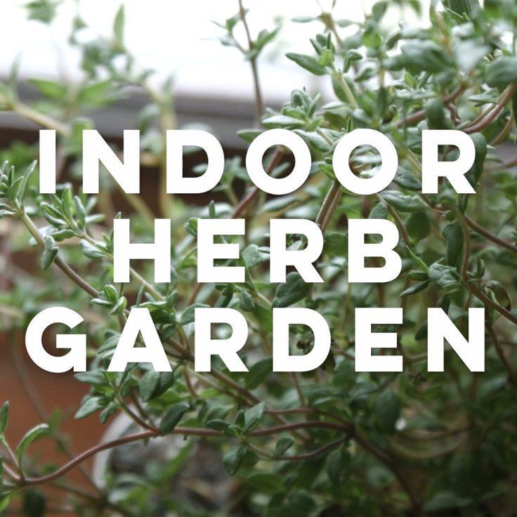 41 best herbs images on pinterest herbs garden herb for Indoor gardening near me