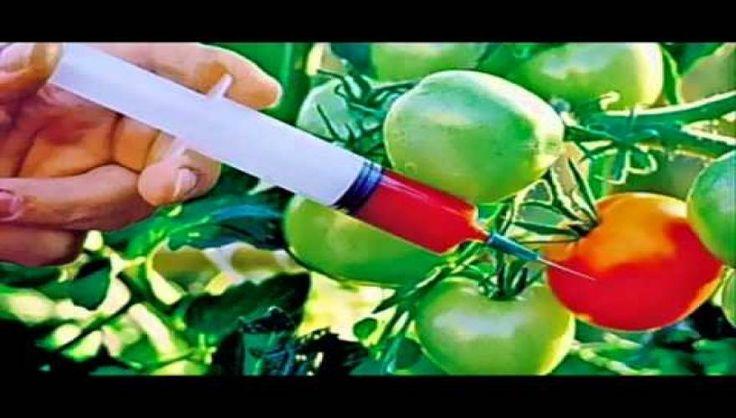 Η νόθευση των βασικών καλλιεργιών του πλανήτη, Γενετικά Μεταλλαγμένη Οργανισμοί (ΓΜΟ) και εκ προθέσεως αλλαγμένο νερό, τροφή και αέρα που συνολικά λειτουργούν ως μια επιχείρηση Ευγονικής για να αδυνατ