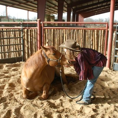 Teaching a Horse to Lay Down Stacy Westfall