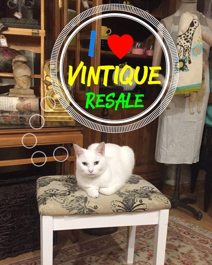 Our Favorite Shop Mascot
