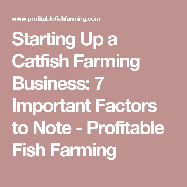 25 best ideas about catfish farming on pinterest for How to start a fish farm