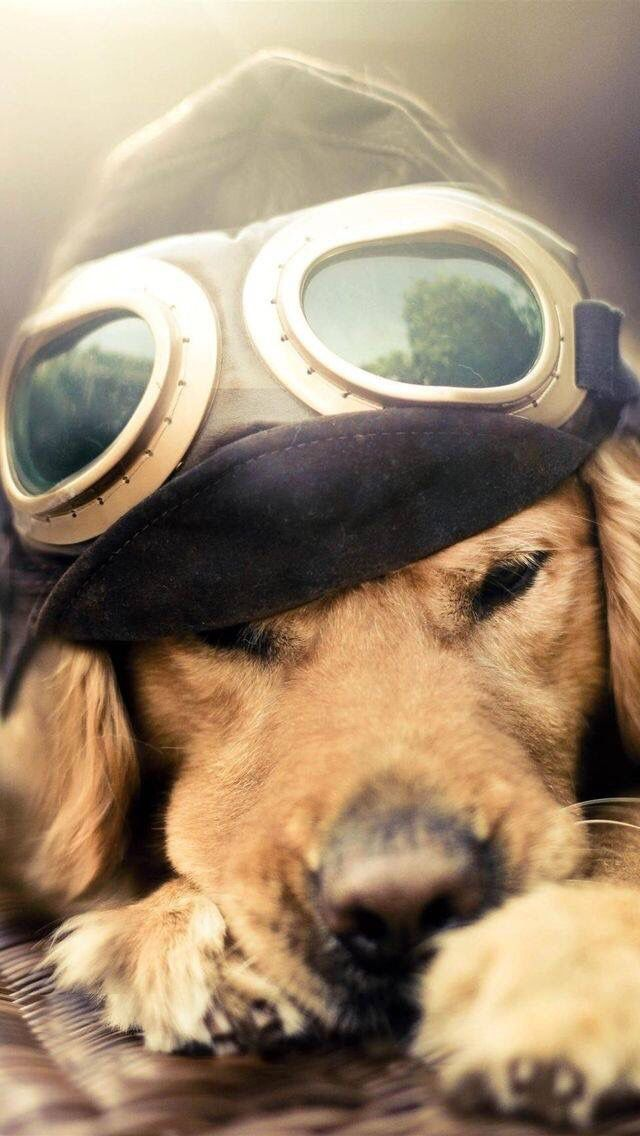 """Pilot dog Hope you're doing well....From your friends at phoenix dog in home dog training""""k9katelynn"""" see more about Scottsdale dog training at k9katelynn.com! Pinterest with over 20,900 followers! Google plus with over 180,000 views! You tube with over 500 videos and 60,000 views!! LinkedIn over 9,300 associates! Proudly Serving the valley for 11 plus years! Now join us on instant gram! K9katelynn"""