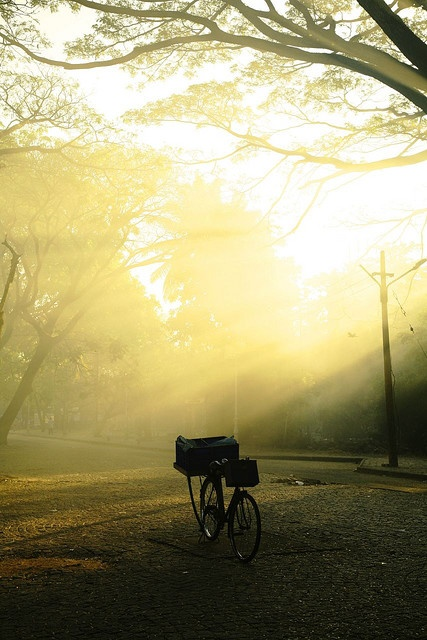 kerala mornings by sophie_goose, via Flickr