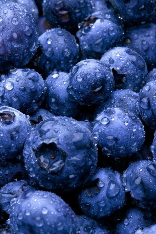 Blueberries are my favorite fruit. When they're in season, I buy them fresh. During the rest of the year, I buy them frozen and thaw them in the microwave. Either way, I have several servings of them during the day.