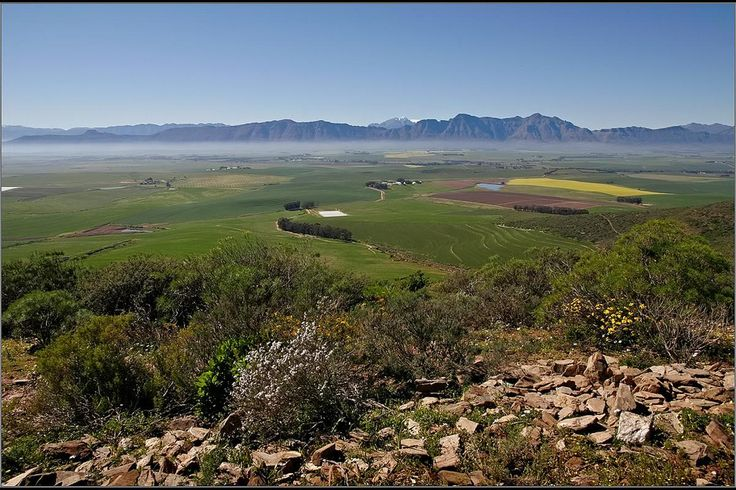 Tranquil surroundings on a wheat, cattle and sheep farm in the Swartland