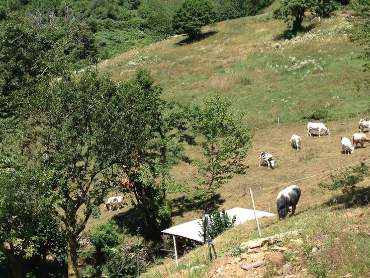 Isasca, Valle Varaita (CN)
