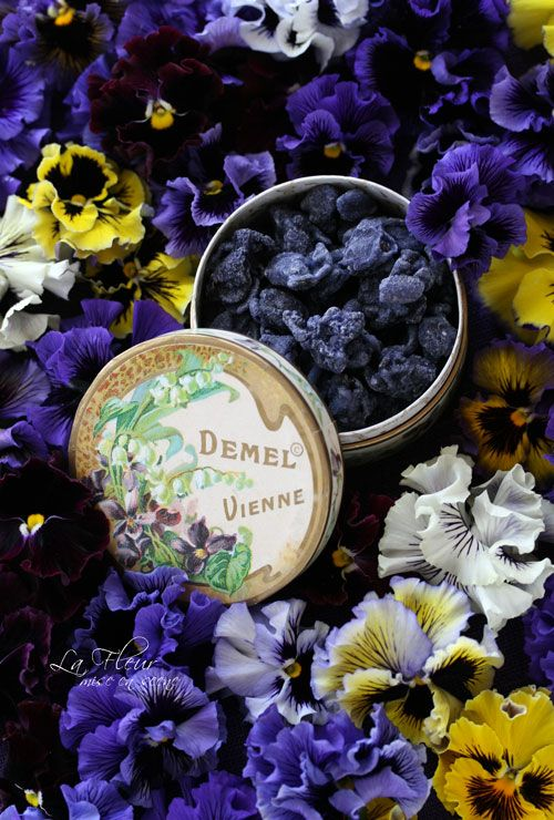 Edible flowers/ Demel's candied violets, Demel Cafe - Vienna, Austria http://sdlafleur.exblog.jp/12949343/
