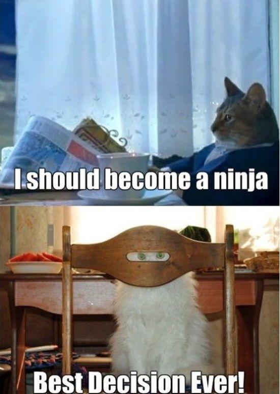 I Should Become A Ninja http://ibeebz.com