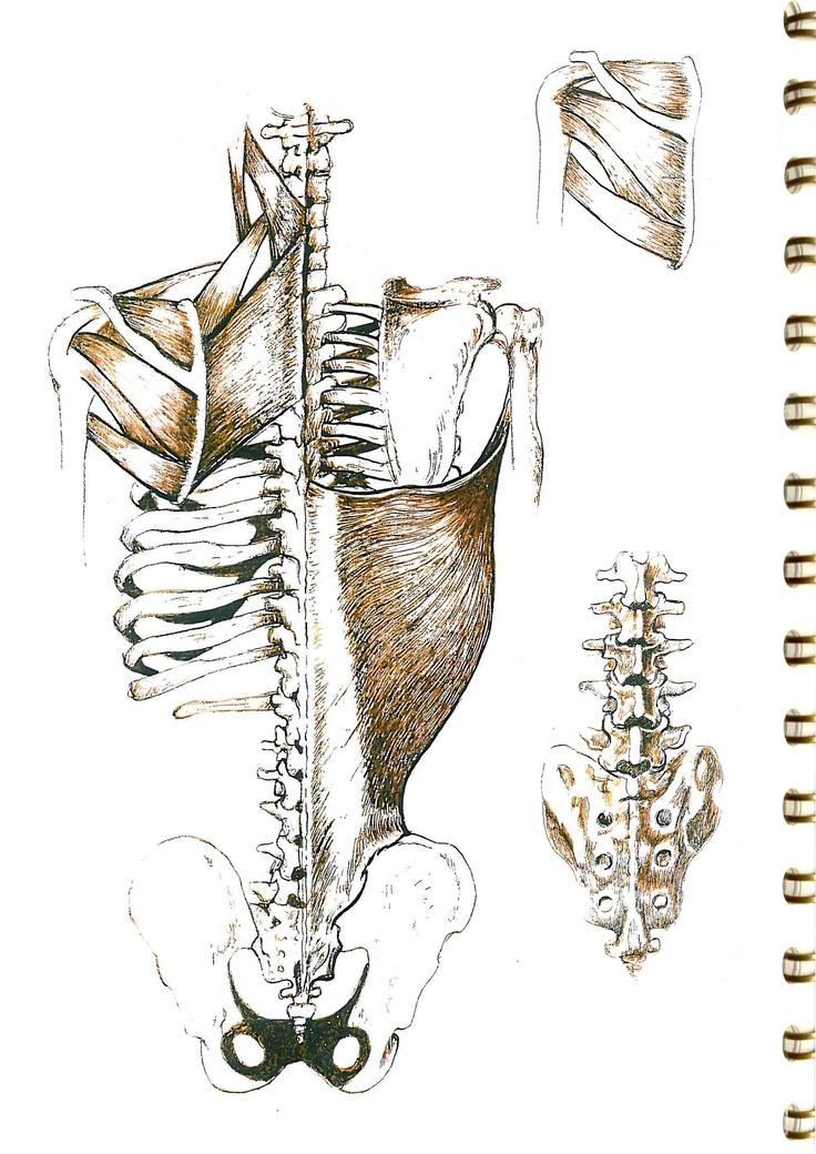 71 besten Anatomie Bilder auf Pinterest | Physiotherapie, Anatomie ...