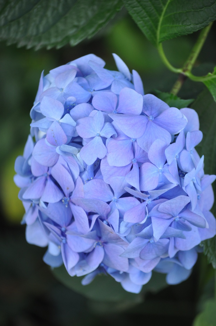 Nice Wedding Flowers In Season In June Composition Blue Wedding