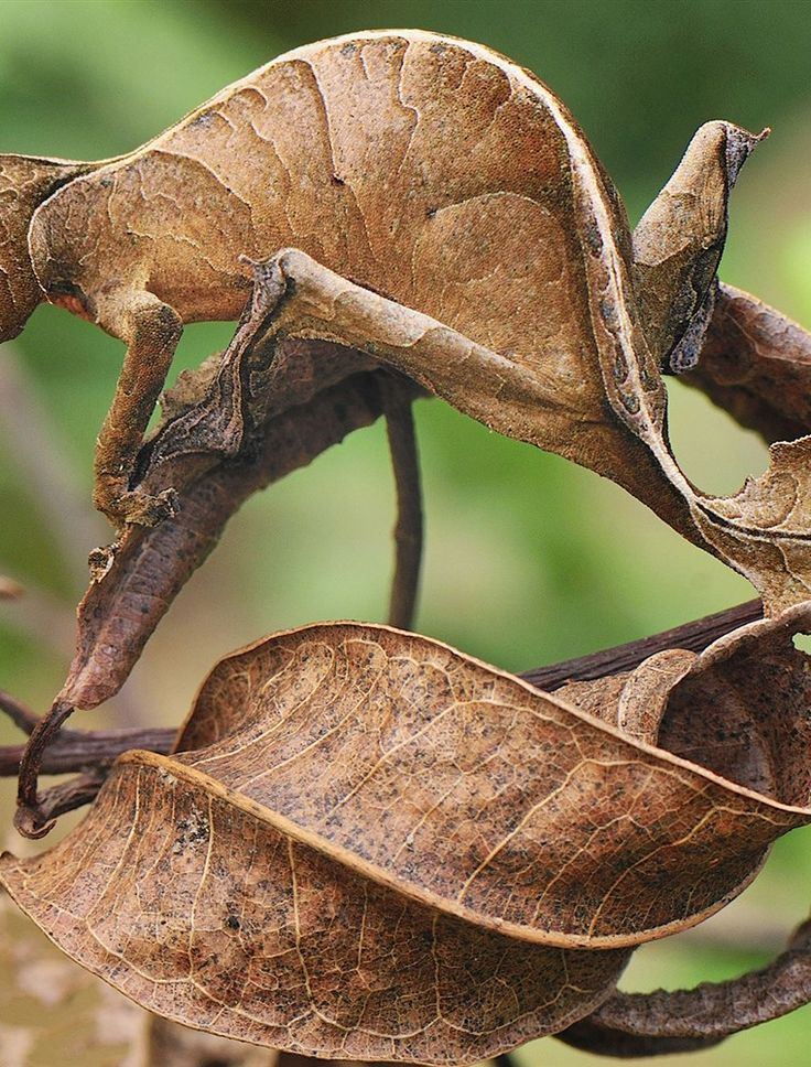 Can you find the 9 camouflaged bugs? Interesting animals Camouflage Tissue types