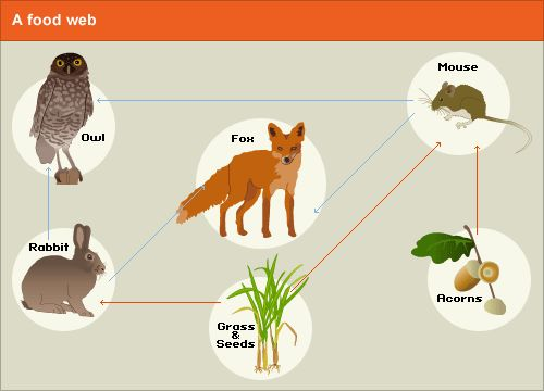 animal pictures for food web | animal food chain examples ...